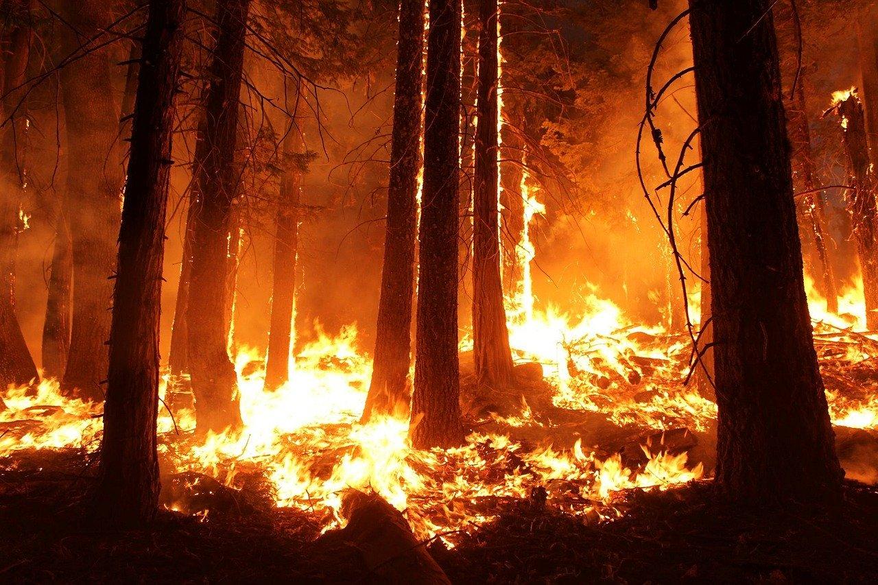 Az ausztráliai bozóttüzek: közel 9000 kárbejelentésnél járnak a biztosítók