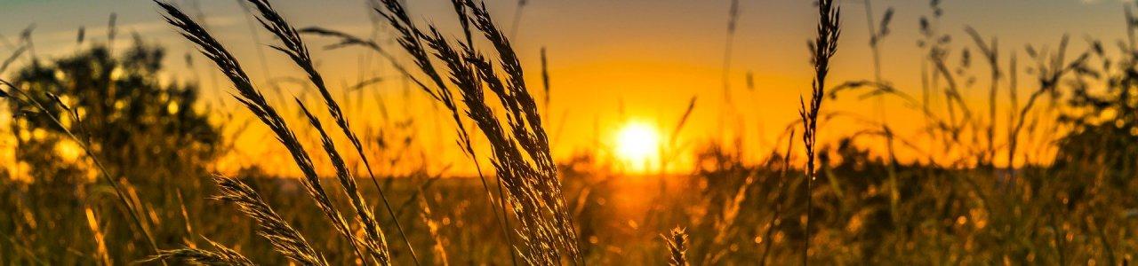 Februárban lehet csatlakozni a mezőgazdasági krízisbiztosítási rendszerhez