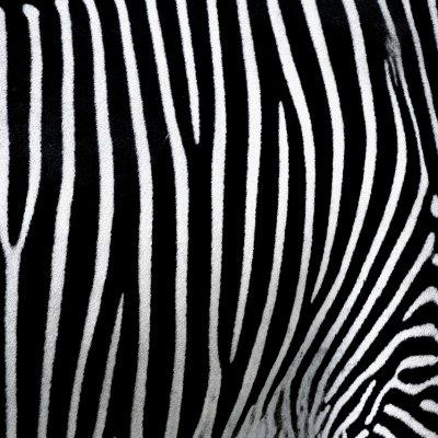 Újabb okos zebrát telepített a Generali
